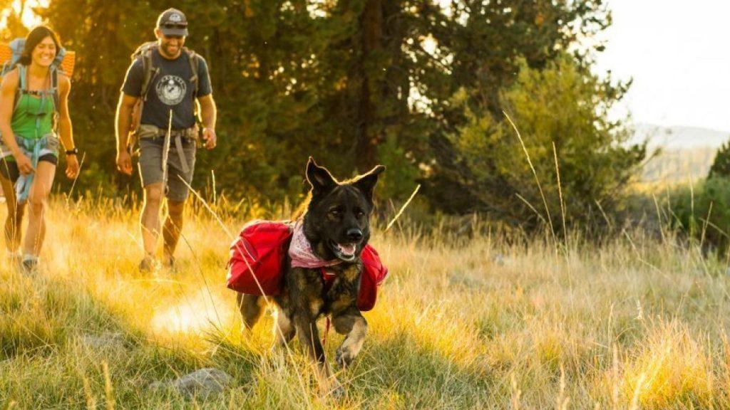 طبیعت گردی با سگ ها لذت بخش است