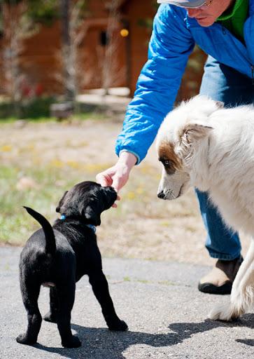 حیوان خانگی را در مواجهه با سایر حیوانات تعلیم دهید
