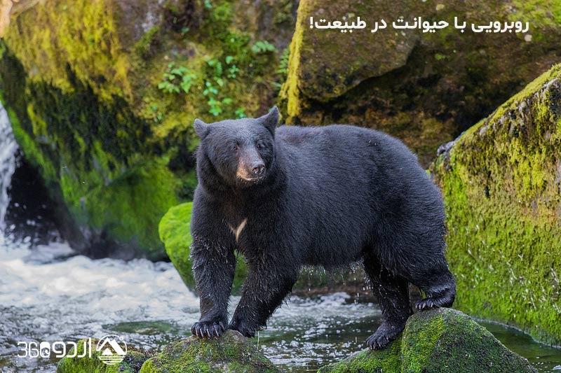 روبرویی با حیوانات وحشی در طبیعت